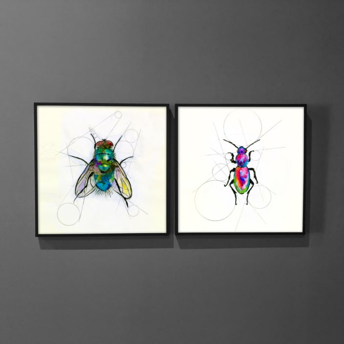 insect art